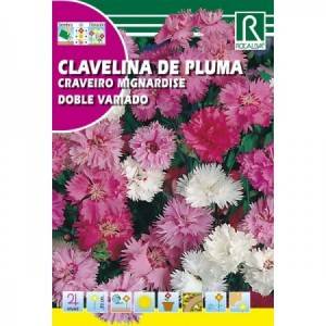 CLAVELINA DE PLUMA DOBLE VARIADO (CLAVEL PLUMARIO) SEMILLA