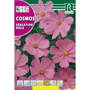 COSMOS SENSATION ROSA SEMILLA
